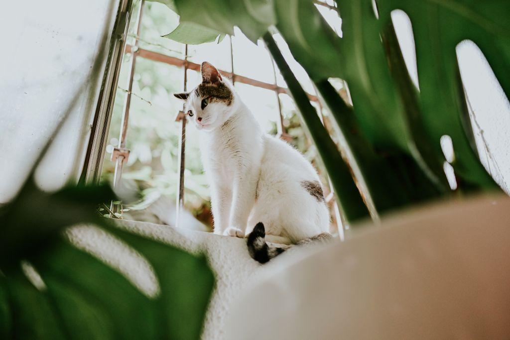 assurance chat blanc